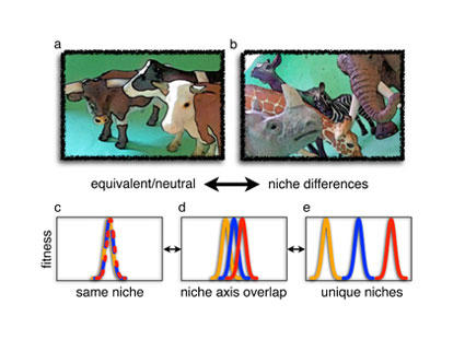 Neutral Theory Of Species Diversity Learn Science At Scitable