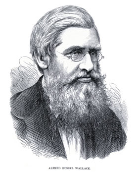 Alfred Russel Wallace, Father of Biogeography | Learn Science at ...