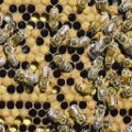 Sex Determination in Honeybees