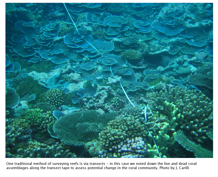 The difficulty of isolating stressors for marine science research   Saltwater Science   Learn Science at Scitable