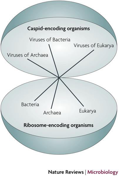 Viruses And The Tree Of Life Learn Science At Scitable