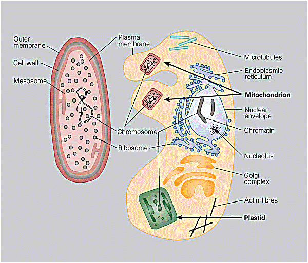 eukaryotic cells learn science at scitable