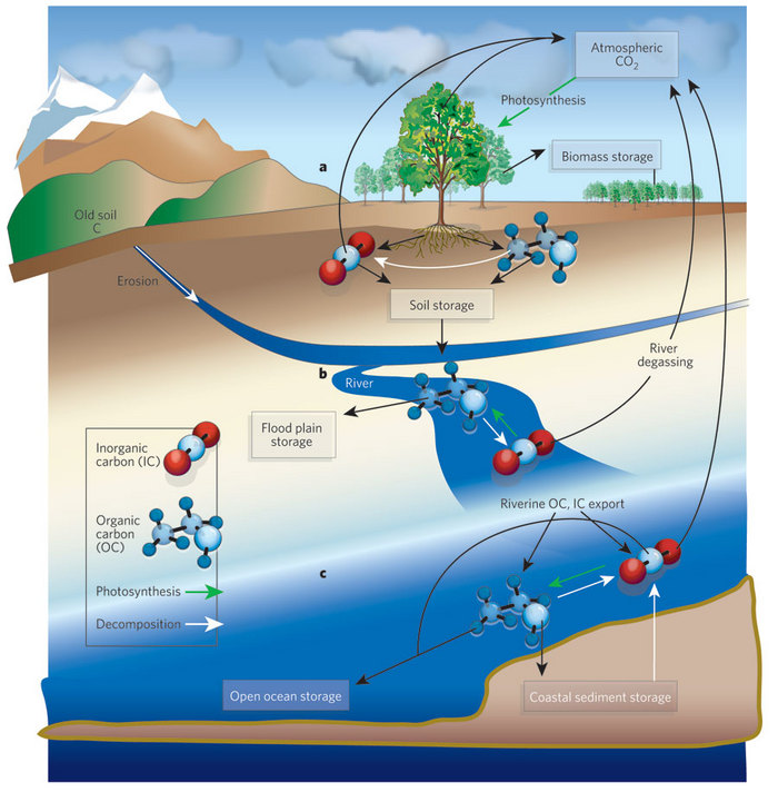 The carbon cycle learn science at scitable the carbon cycle ccuart Image collections