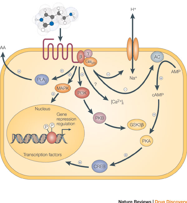 GPCR | Learn Science at Scitable