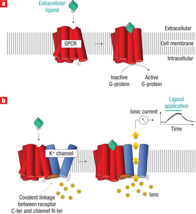 Ion Channel | Learn Science at Scitable