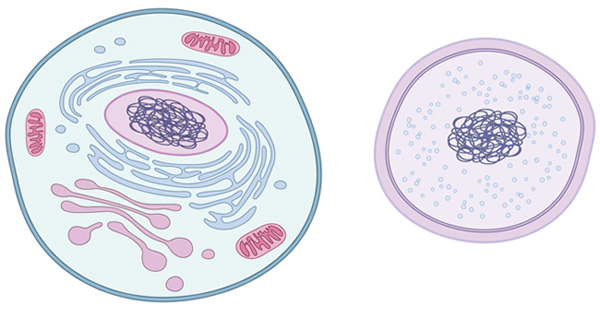 what is a cell learn science at scitable