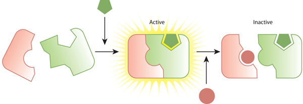 a three-part schematic shows two types of interactions between an enzyme  and a substrate