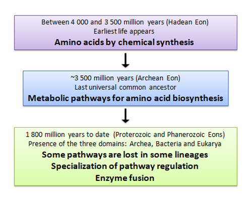 Amino Acids Evolution Learn Science At Scitable