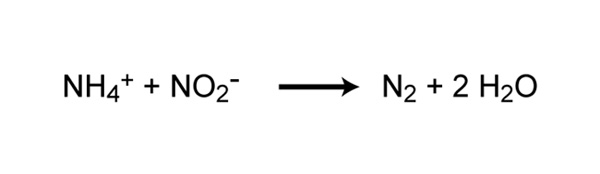 Chemical reaction of anaerobic ammonia oxidation (anammox)