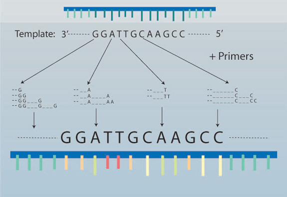 Sanger sequencing method