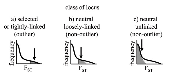 Three arbitrary classes of loci embedded within a continuous distribution of F<sub>ST</sub> values