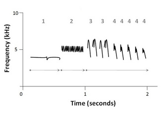 Schematic sound spectrogram of a white-crowned sparrow (<i>Zonotrichia leucophrys</i>) song