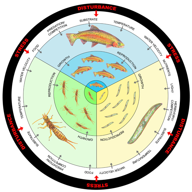 Diagram of the hierarchical levels of an ecosystem that respond to anthropogenic disturbances or natural stress