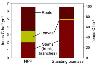 Net primary production (NPP) and standing biomass allocation for a 90-year-old Michigan forest estimated from inventory-based methods in which biomass growth is quantified over time (Gough <i>et al.</i> 2008)