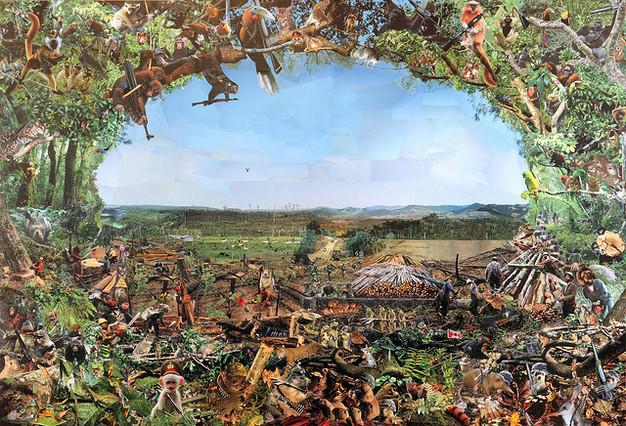 amazon rainforest plants collage. have amazon rainforest plants collage k
