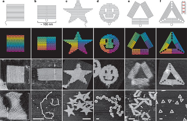 DNA Origami | Bio 2.0 | Learn Science at Scitable