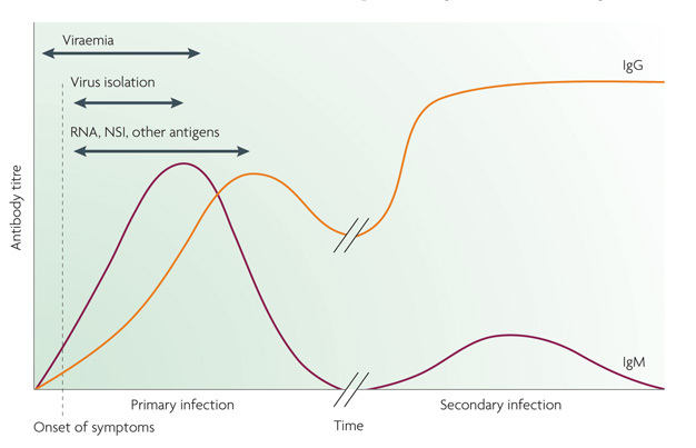 Current Dengue Fever Research  Learn Science At Scitable A Line Graph Shows Levels Of The Antibodies Igg And Igm After Primary And  Secondary Dengue Custom Writing Service Prices 7 55 also Argumentative Essay Examples High School  English Essay Friendship