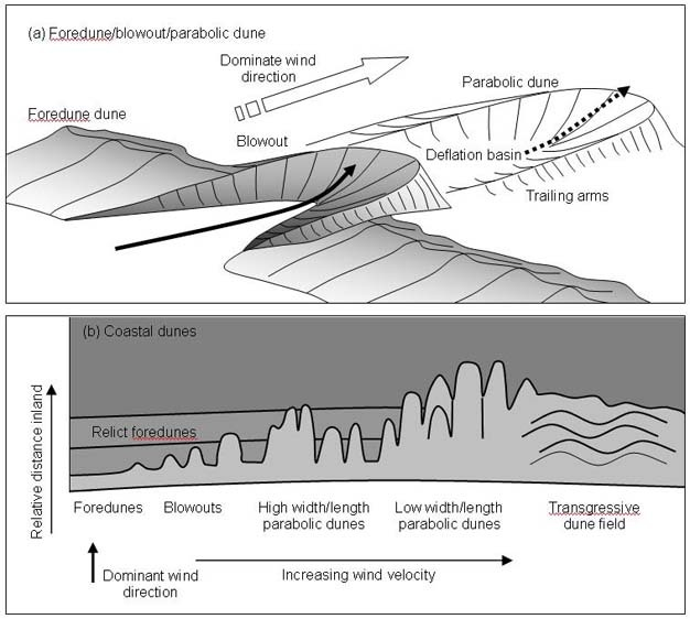 Coastal Dunes Geomorphology Learn Science At Scitable