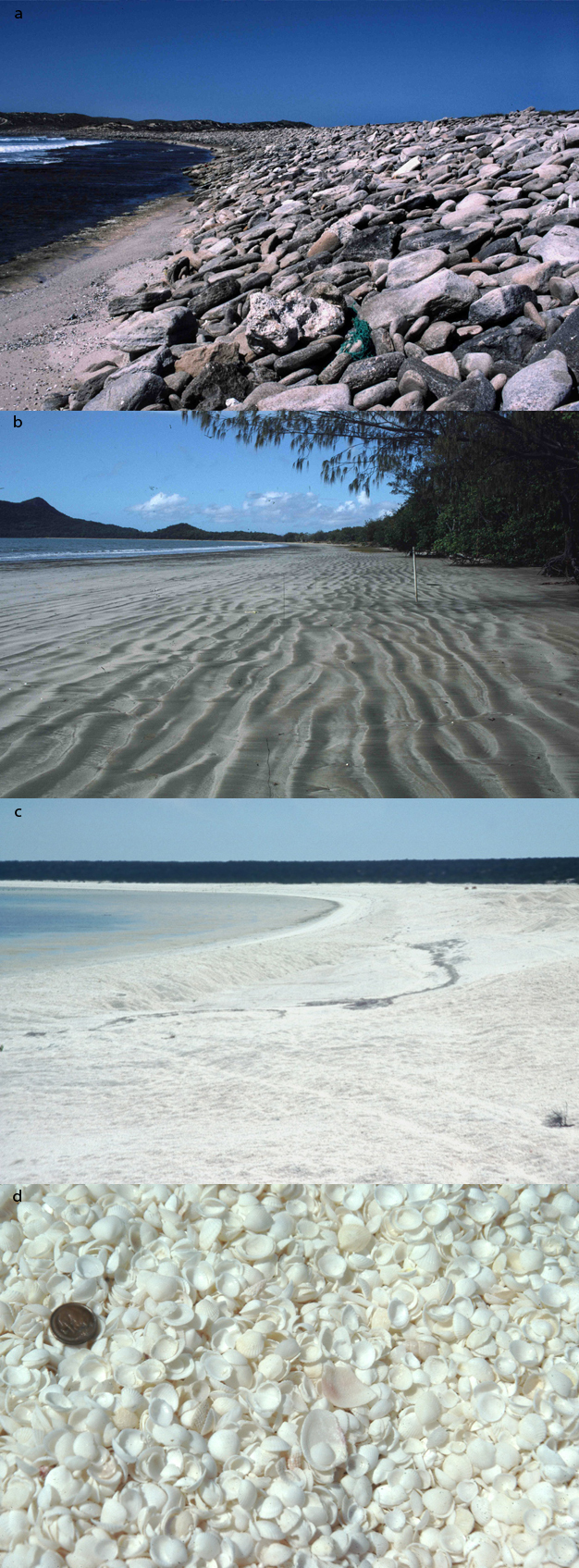 an introduction to coastal processes and geomorphology hodder arnold publication