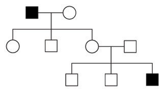 A pedigree diagram shows the manifestation of a single trait in a family over three generations. Individuals that express the trait of interest are represented by a black symbol. Individuals that do not express the trait of interest are represented by an open symbol. One male in the first generation and one male in the third generation express the trait of interest.