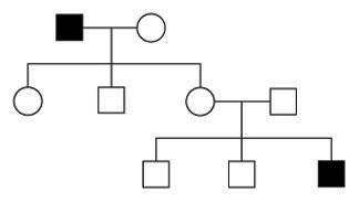 family pedigree