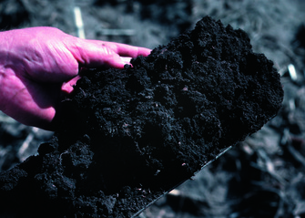 This soil from Iowa is dark due to high organic matter content