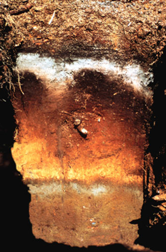 A soil from Alaska showing distinct horizons