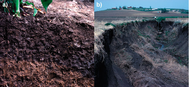 (a) Soil in central Iowa with dark, organic-matter-rich topsoil.
