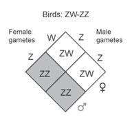 Zw Sex Determination 45