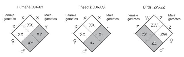 zulu sexxxx girls
