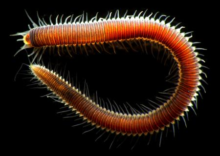 glowing worms in bermuda creature cast learn science at scitable