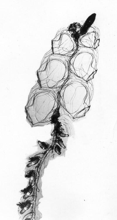 Hiding submarines beneath jellyfish | Creature Cast | Learn