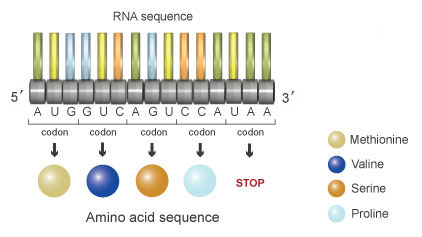 The Information in DNA Determines Cellular Function via