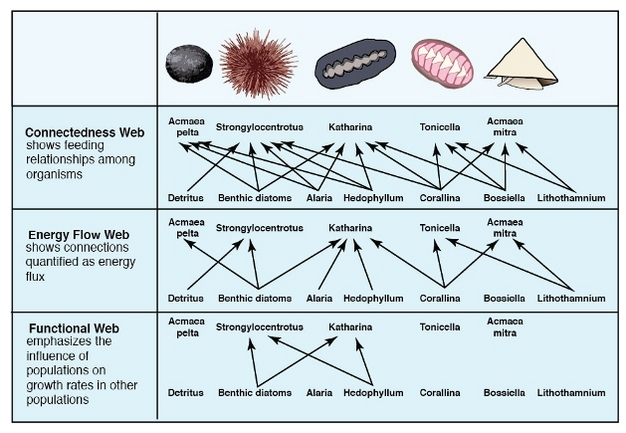 three types of food web diagrams based on species of a rocky intertidal  zone on the