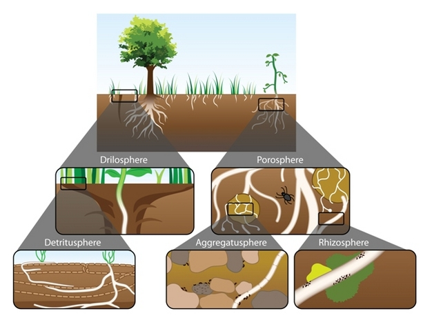 Arenas of activity in soils contain hot spots.