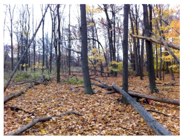 deciduous forest examples