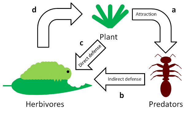 Plant Resistance Against Herbivory Learn Science At Scitable