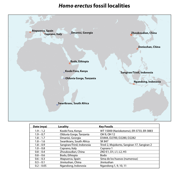 Map of <i>Homo erectus</i> fossil localities.
