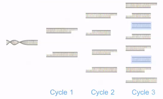 polymerase chain reaction / PCR | Learn Science at Scitable