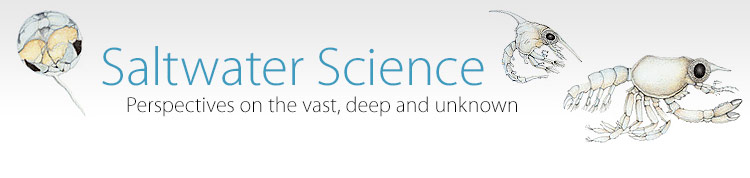 The science of underwater sound | Saltwater Science | Learn Science